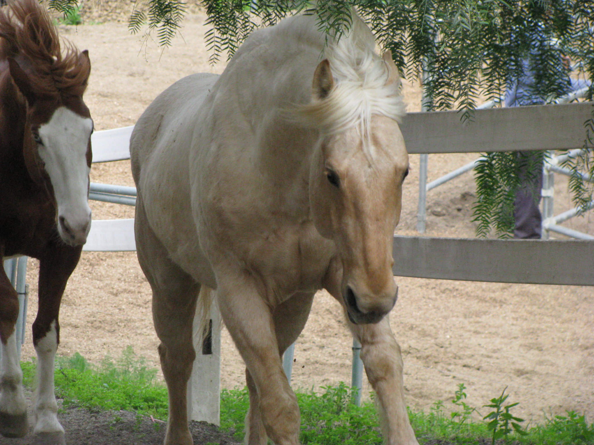 Celia's Ranch: another rescue , rehabilitation and new home