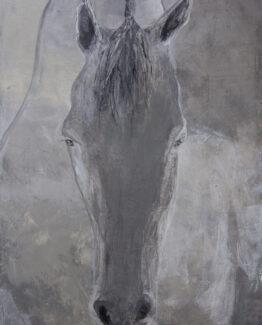 horse-gray-white