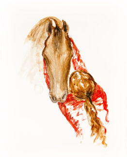 horse-and-girl